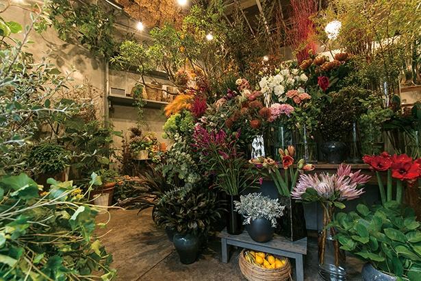 オーナーの川滝光雄さんが一本一本目で選んだという、色とりどりの花々が「TAKI FLEURISTE」の店内で咲き誇る
