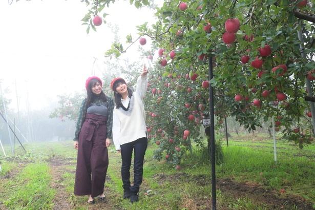 「真っ赤なリンゴがいっぱいだよ!」(2人)
