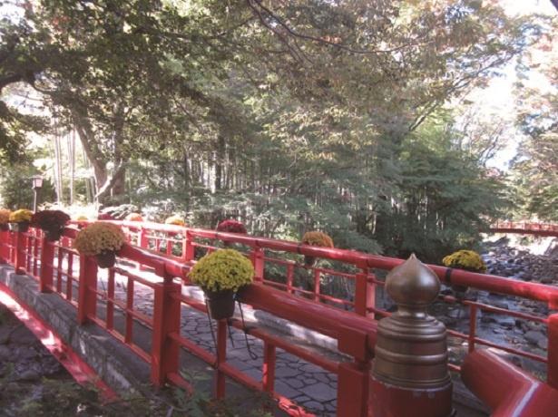 桂橋(写真)をはじめ、温泉街がキクの花々で飾られる