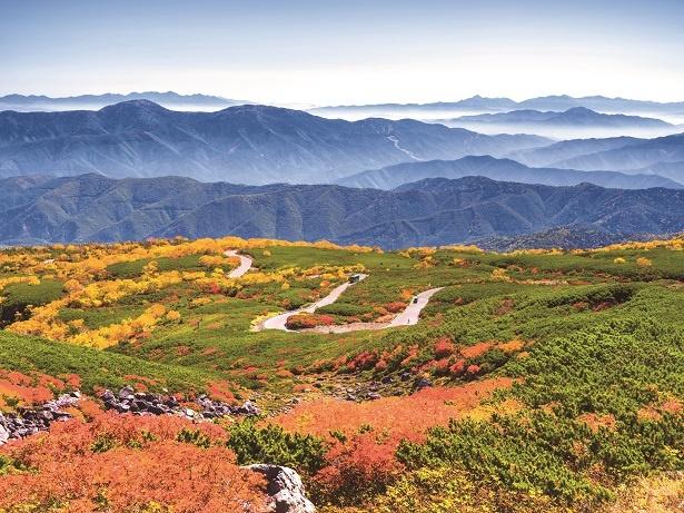 標高2600mのダイナミックで色鮮やかな紅葉を観賞できる「乗鞍エコーライン」