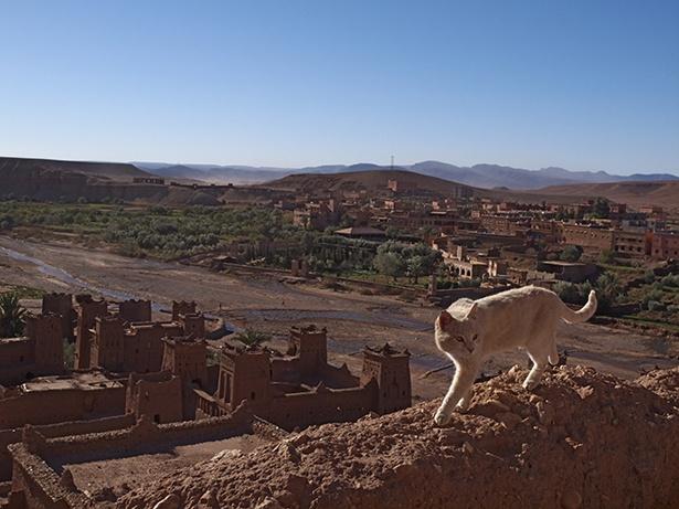 モロッコの世界遺産を自由に駆け回るインディゴ♂