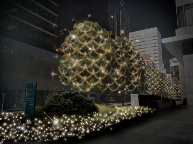 ミッドランドスクエア前の街路樹はシャンパンゴールドの電飾でゴージャスイルミ!