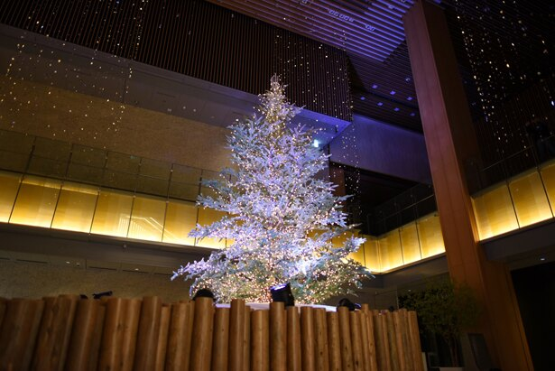 [写真を見る]本物のモミの木を使ったクリスマスツリー