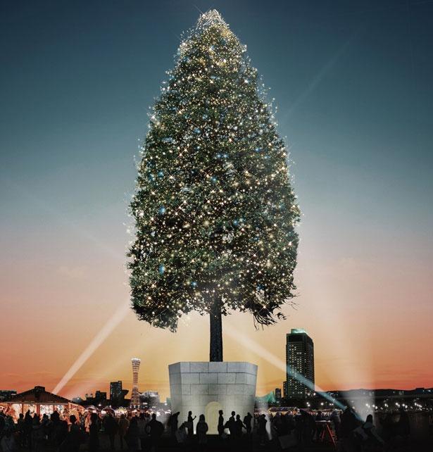 全長30mという世界一の高さを誇る生木のクリスマスツリー/めざせ!世界一のクリスマスツリープロジェクト〜輝け、いのちの樹。〜