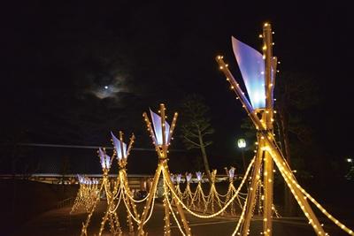 浮雲園地会場の奈良春日野国際フォーラム 甍~I・RA・KA~の前の歩道には、なら瑠璃絵のシンボルとなっているイルミが並ぶ /第9回しあわせ回廊なら瑠璃絵