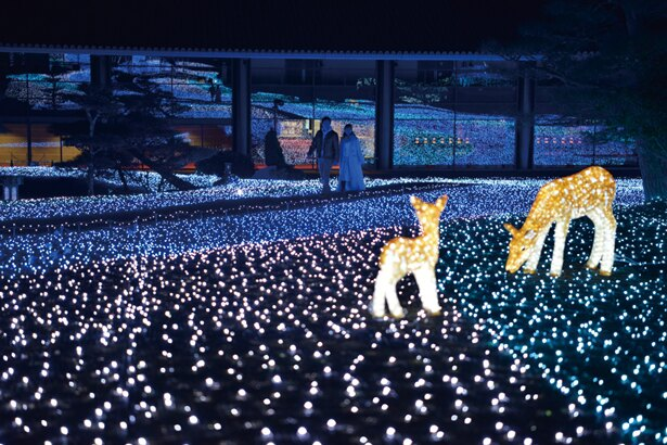 奈良公園の代名詞、シカのイルミもキュート/ 第9回しあわせ回廊なら瑠璃絵