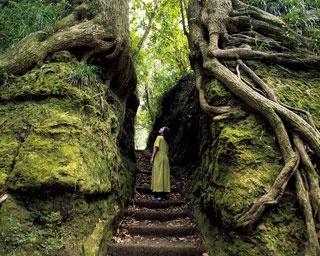 パックリと割れた岩壁の中に出現する階段は、まるで異空間への入口。巨大な木の根がうねうねとはい、今にも動きだしそうだ/泉津の切通し