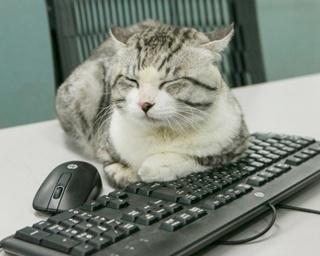 【写真特集】ネコが九州ウォーカー編集部でお仕事体験