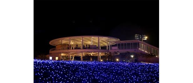 光の花畑の一番のビュースポットは展望台
