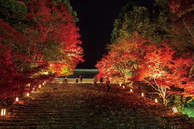 秋の深まりを感じに、スニーカーで行ける紅葉お手軽ハイキングに出かけよう♪