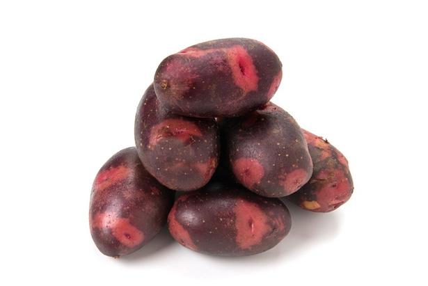 【写真を見る】ジャガイモの仲間「デストロイヤー」