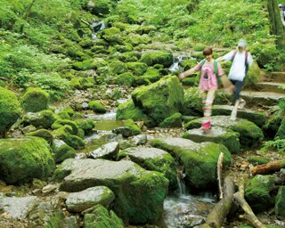 七代の滝から綾広の滝まで約1.5km続く、森の中の散策路・ロックガーデン。朝露や雨上がりで岩場がぬれている時は、滑りやすいので足元に気を付けよう