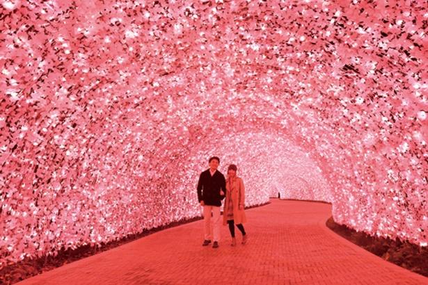 新登場の桜色で彩られる100mのトンネル/なばなの里