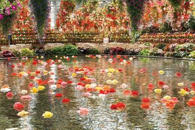 鮮やかな花に囲まれて記念撮影/なばなの里