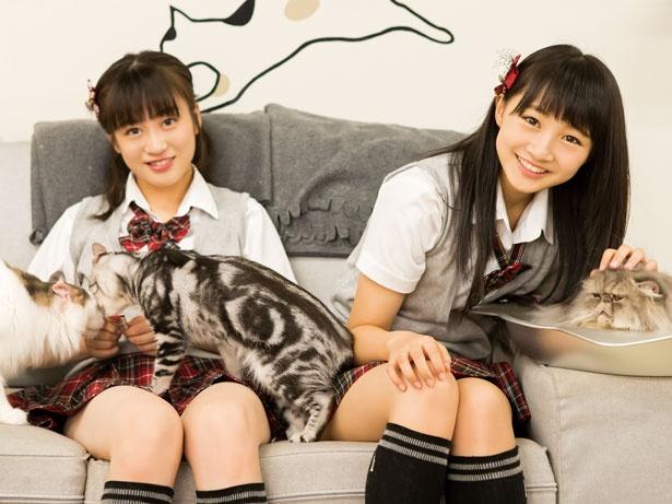 モフモフかわいい猫と一緒/猫カフェ にあにゃあ