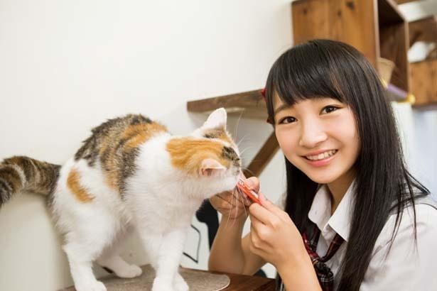 あーやんの推しニャン「あずきちゃん」(スコティッシュフォールド)/猫カフェ にあにゃあ