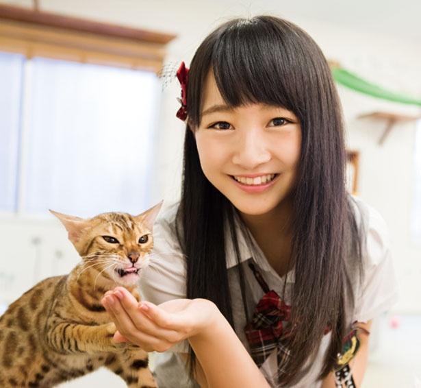 おやつは100円~300円(数量限定)/猫カフェ にあにゃあ