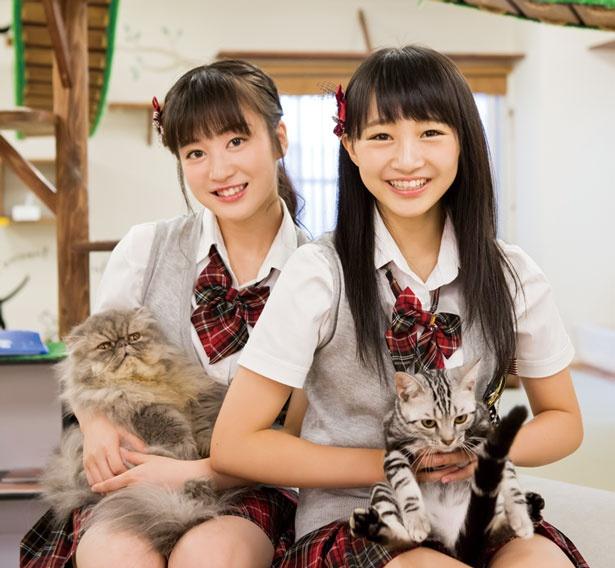 猫が嫌がらなければ抱っこもOK/猫カフェ にあにゃあ