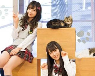 モフモフかわいい猫と一緒/猫カフェ キャットテイル