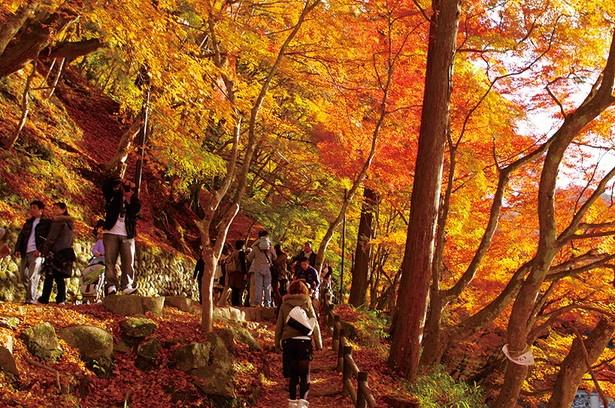 香嵐渓の入口から香積寺までの700mは背の高い木が多く、紅葉のトンネルの中を歩いているよう