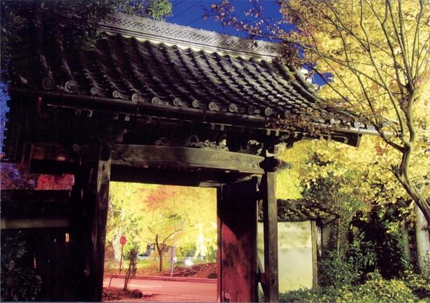 【写真を見る】祭り会場内にある祐専寺は特に人気のスポット。夜間はライトアップが行われる
