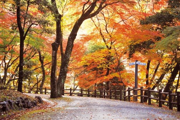 名瀑・養老の滝へと続く紅葉のトンネル「せせらぎ街道」を散策!
