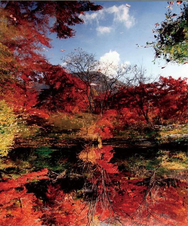【写真を見る】逆さモミジが見られる「不老ヶ池」
