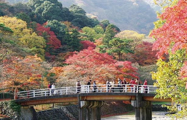 川沿いのモミジ、その奥に広がる緑のコントラストを楽しめる「不動橋」。橋は渡月橋もオススメ!