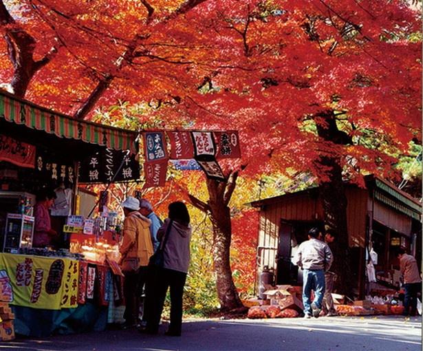 養老の滝へ続く遊歩道「養老孝子坂」