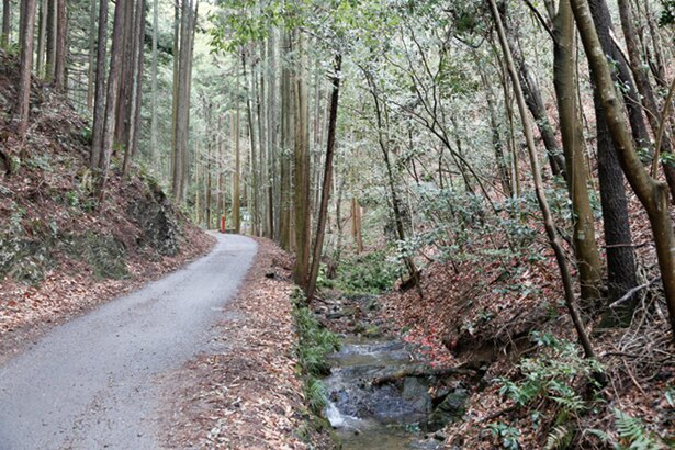 五常の滝周辺までは緩やかな傾斜の舗装路が続き、歩きやすい。ウォーミングアップにぴったり!