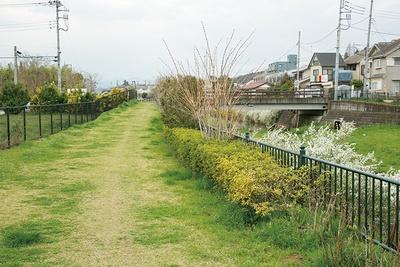 城山下橋から道の駅へ向かう途中の遊歩道。季節の花々が咲く道をのんびり歩こう