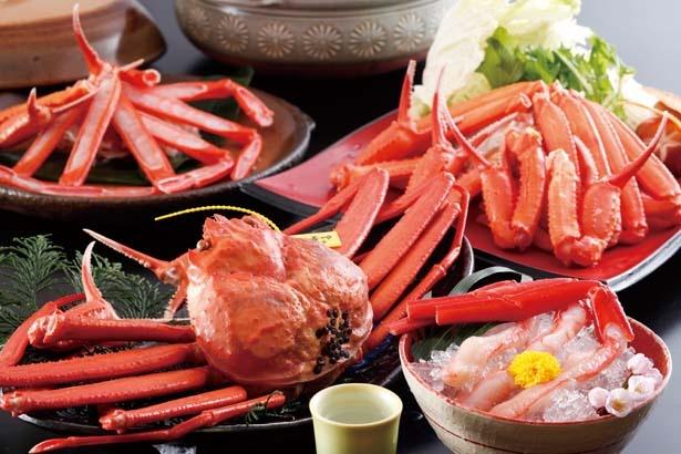 松葉ガニと香住ガニを食べ比べることができる人気プラン/荒神の宿 三宝