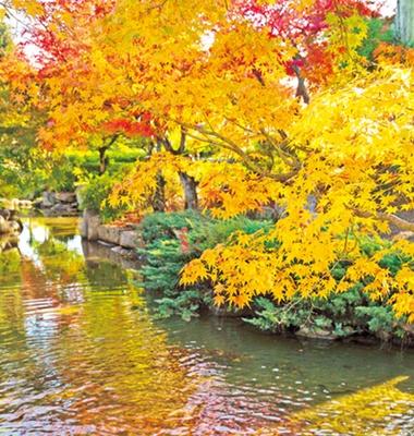 心種園などで紅葉が楽しめる/舞鶴公園