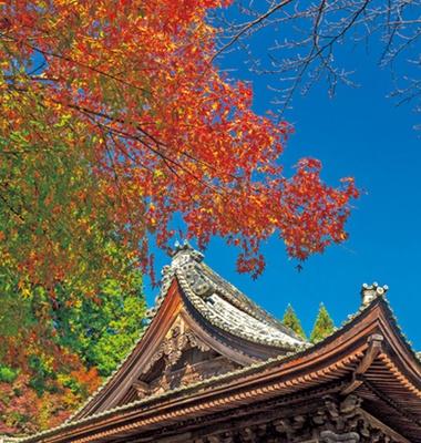 多宝塔や本堂横がキレイ/円隆寺