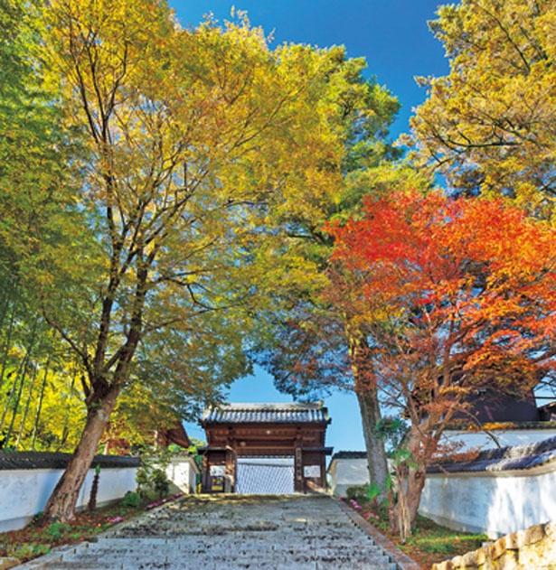 参道を紅葉のトンネルのように彩る/見樹寺