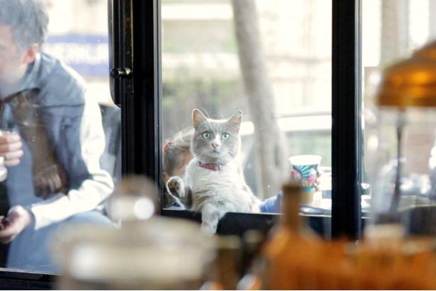 グルメでとっても礼儀正しい紳士のデュマンは、窓をカリカリおねだり