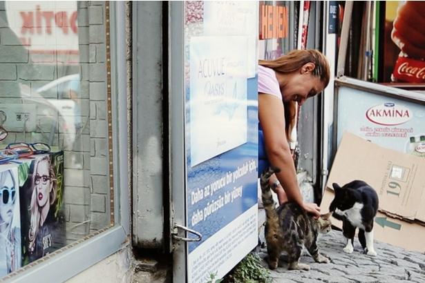猫同士のケンカに、人の立ち入りは禁物です
