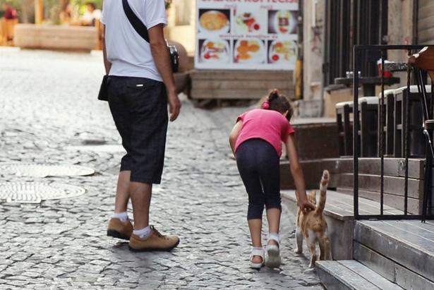この街では、猫を追いかけ始めたらキリがない