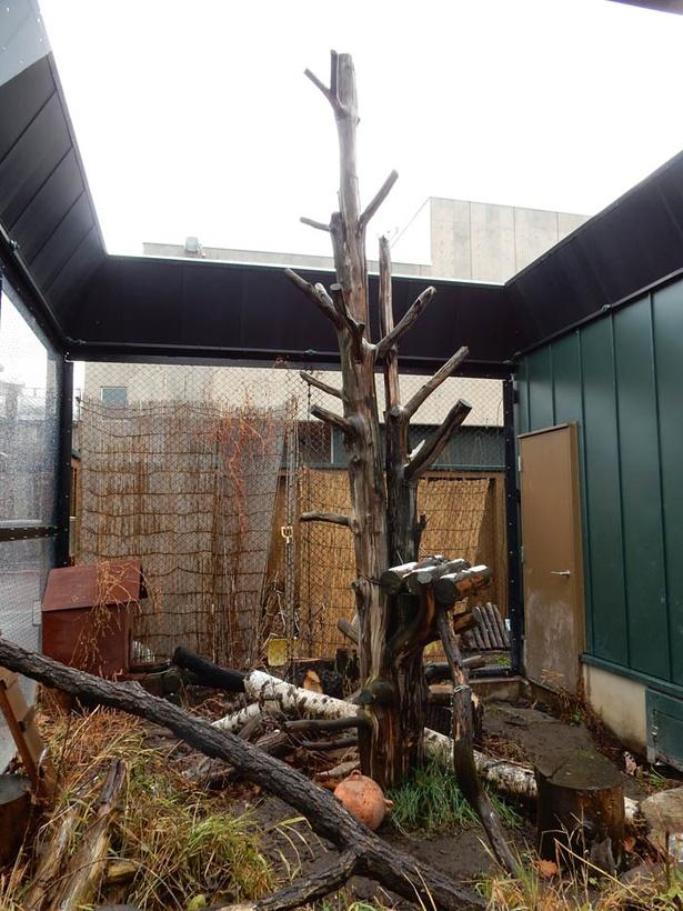 旭山動物園/アライグマの放飼場にある木
