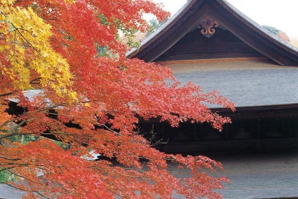 瀬戸の紅葉の名所「定光寺」に訪れてみるのもあり