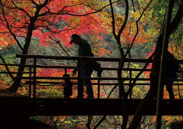 3号トンネルを抜けた先の橋では紅葉と竹林を一度に楽しめる