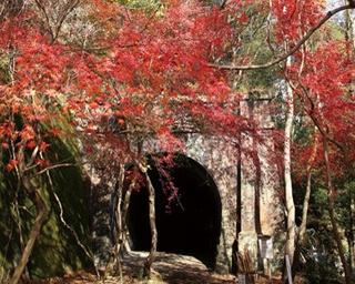 1966年に廃線となった旧国鉄中央西線の愛岐トンネル群が紅葉スポットとして特別公開