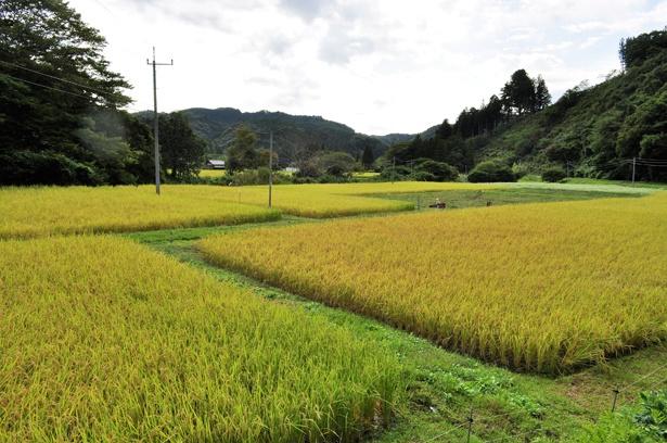 こちらは、高荻地方の田園風景