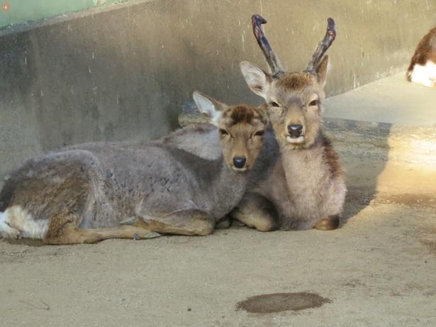 「和歌山公園動物園」は入場無料