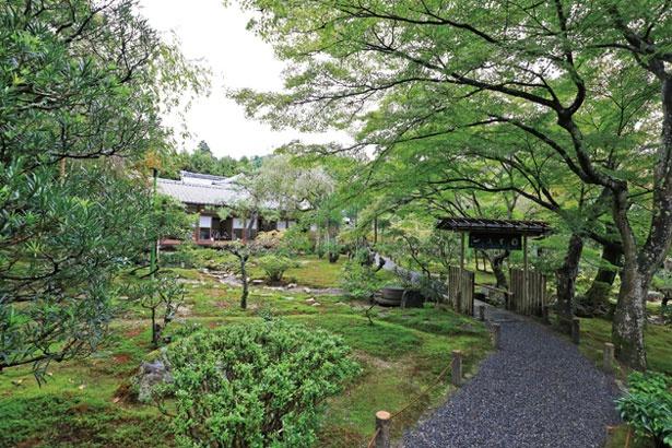 入口の門から、庭を抜けるアプローチも贅沢/龍安寺 西源院