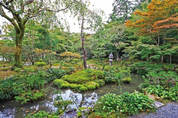 【写真を見る】ししおどしの音が響き、池には優雅に泳ぐコイの姿も/龍安寺 西源院