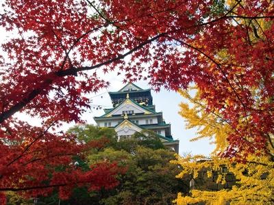 白い天守閣を背景に、赤く色付いた木々とのコントラストが美しい/大阪城公園