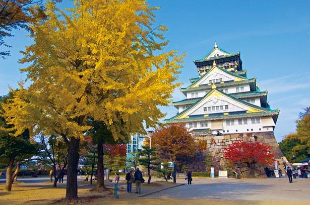 樹齢300年とも言われる大イチョウの木/大阪城公園