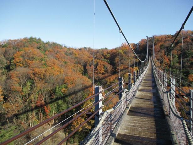 【写真を見る】木床板人道つり橋としては国内最大級/ほしだ園地