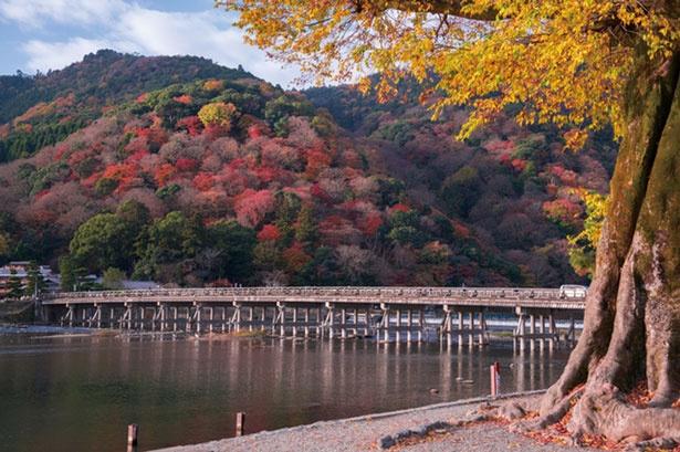 曲線の美しい渡月橋の背景に、赤や黄色の錦に染まった山々が広がる光景/渡月橋